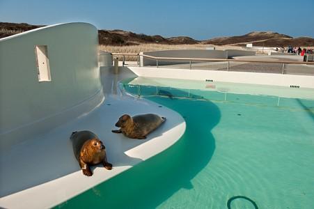 Nieuwbouw zeehondenbassins Eco Mare